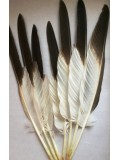 807. Перья редких птиц 30-35 см