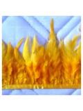 1 м. Желтый цвет. Тесьма из перьев 6-11 см