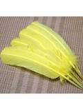 1 шт. Желтый цвет. Гусиное перо 25-30 см