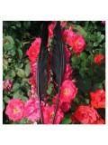 1 шт. Черный цвет. Гусиное перо 30-40 см