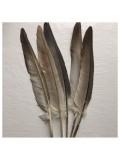 815. 1 шт. Перья редких птиц 15-20 см