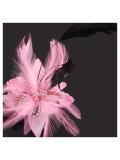 СС-4. Розовый цвет. Заколки из перьев птиц для волос и броши