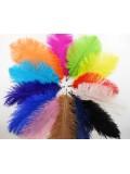1 шт. Белый цвет. Перья птиц страуса 13-17 см