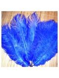 1 шт. Синий цвет. Перья страуса 25-30 см