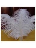 1 шт. Белый цвет. Перо страуса 30-35 см