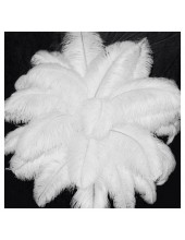 1 шт. Белый цвет. Перья птиц страуса 40-45 см.  Экстра класс