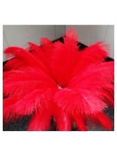 1 шт. Красный цвет. Перья птиц страуса 50-55 см