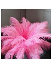 1 шт. Розовый цвет. Перья птиц страуса 50-55 см