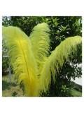 1 шт. Желтый цвет. Перья птиц страуса 60-65 см