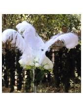 1 шт. Белый цвет. Перья птиц страуса 65-70 см.  Экстра класс