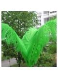 1 шт. Зеленый цвет. Перья птиц страуса 65-70 см