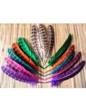 Перья фазана 13-15 см