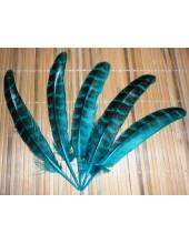 20 шт. Голубой цвет. Перья фазана 13-15 см.