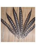 772. 1 шт. Перья фазана 15-20 см.