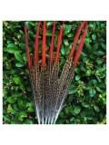 776. 1 шт. Перья фазана 20-25 см.