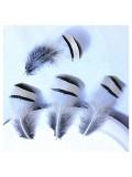 10 шт. Натуральный цвет. Перья фазана 3-6 см. Цветное перо
