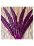 1 шт. Фиолетовый цвет. Перья фазана 30-35 см