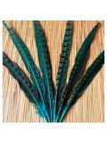 1 шт. Голубой цвет. Перья фазана 30-35 см