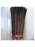 792. 1 шт. Натуральный цвет. Перья фазана 45-50 см.