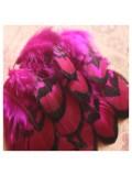 10 шт. Фуксия цвет. Перья фазана 4-9 см.
