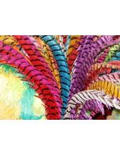 Перья фазана 50-55 см. Цветное