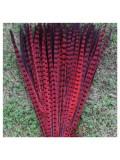 1 шт. Красный цвет. Перья фазана 50-55 см. Цветное