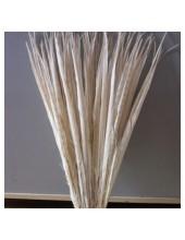 1 шт. Белый цвет. Перья фазана 50-55 см. Цветное
