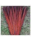 1 шт. Оранжевый цвет. Перья фазана 50-55 см. Цветное