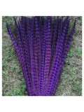 1 шт. Фиолетовый цвет. Перья фазана 50-55 см. Цветное