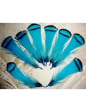 10 шт. Голубой цвет. Перо фазана 6 см. С полосками