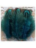 10 шт. Морская волна цвет. Фазан цветное перо 4-7 см