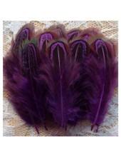 10 шт. Фиолетовый цвет. Фазан цветное перо 4-7 см