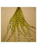 20 шт. Желтый цвет. Перья американского петуха 10-15 см. 2-х цветные