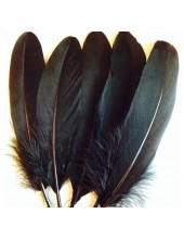 20 шт. Черный цвет. Перо Петуха 15-20 см