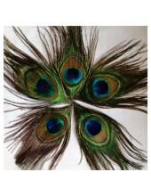 1 шт. Перо павлина. Глаз 3-5 см