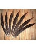 580. 1 шт. Перья редких птиц 30-35  см