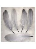 20 шт. Серый цвет. Перо Петуха 10-15 см