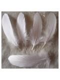 20 шт. Белый цвет. Перо Петуха 10-15 см