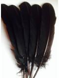 1 шт. Черный цвет. Гусиное перо 25-30 см