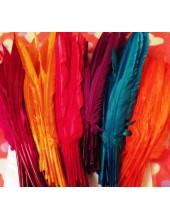 Перья петуха 30-40 см. Цветное