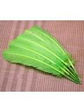 1 шт. Салатовый цвет. Гусиное перо 25-30 см