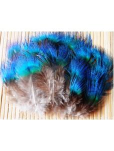 Перья павлина 3-7 см.