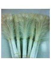 1 шт. Молочно-белый цвет. Перо Павлина 80-90 см