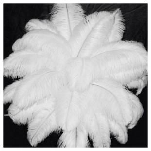 1 шт. Белый цвет. Перья птиц страуса 35-40 см. Экстра класс