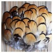 885 10 шт. Перья редких птиц 5-7  см
