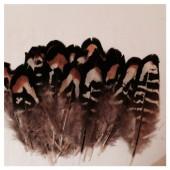 753. 10 шт. Перья редких птиц 7-10 см