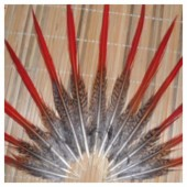 774. 1 шт. Перья фазана 8-10 см.