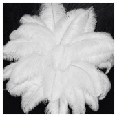 1 шт. Белый цвет. Перья страуса 40-45 см. Экстра класс