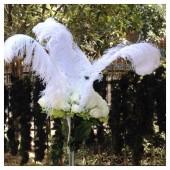1 шт. Белый цвет. Перья страуса 65-70 см. Экстра класс