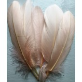 20 шт. Бежевый цвет. Перья петуха 15-20 см